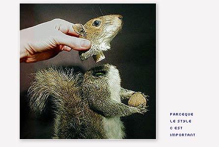 decanteur ecureuil