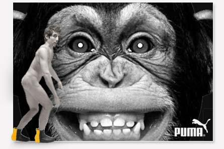 Monkey Puma
